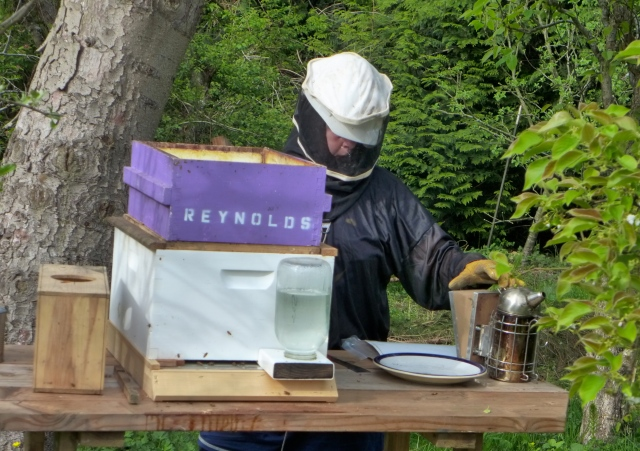 hive inspection1