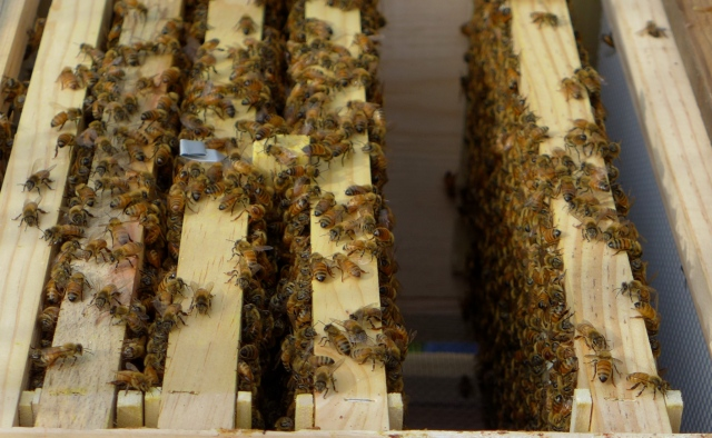 hive inspection10