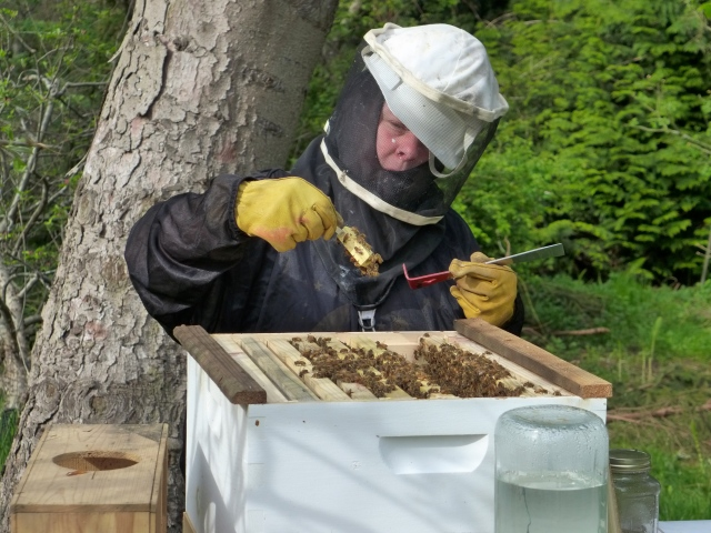 hive inspection11