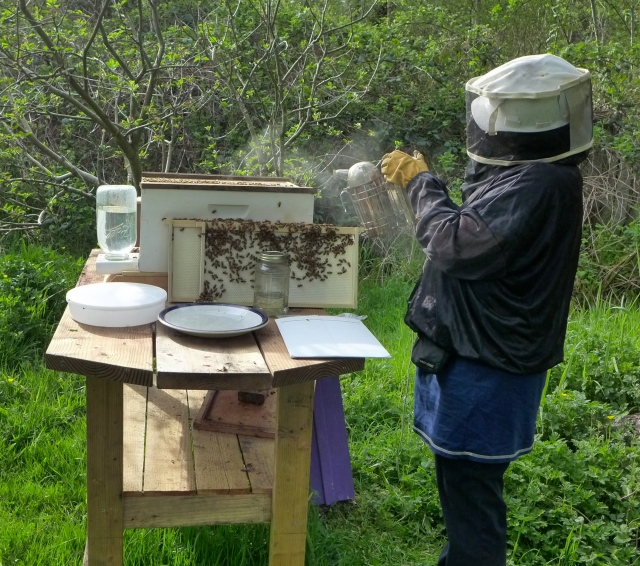 hive inspection12