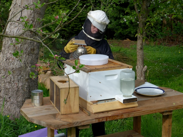 hive inspection3
