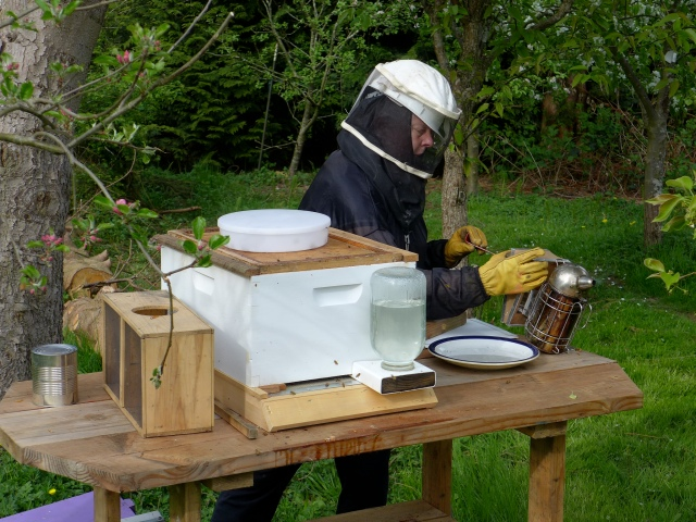 hive inspection4