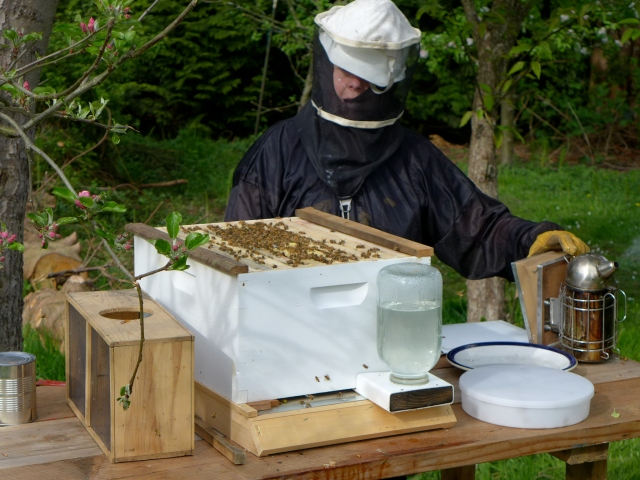 hive inspection6