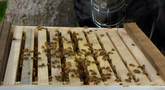 hive inspection7