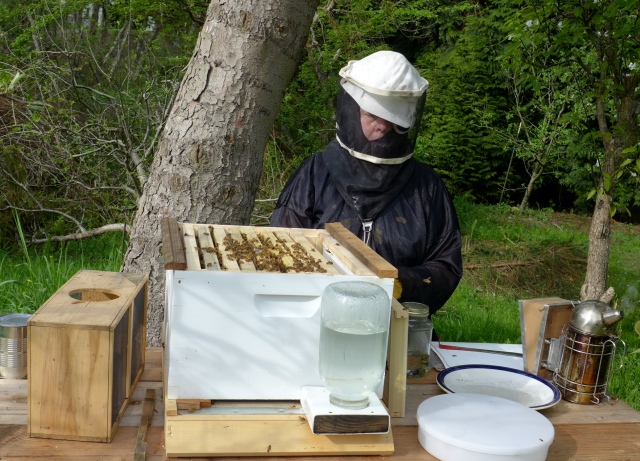 hive inspection8