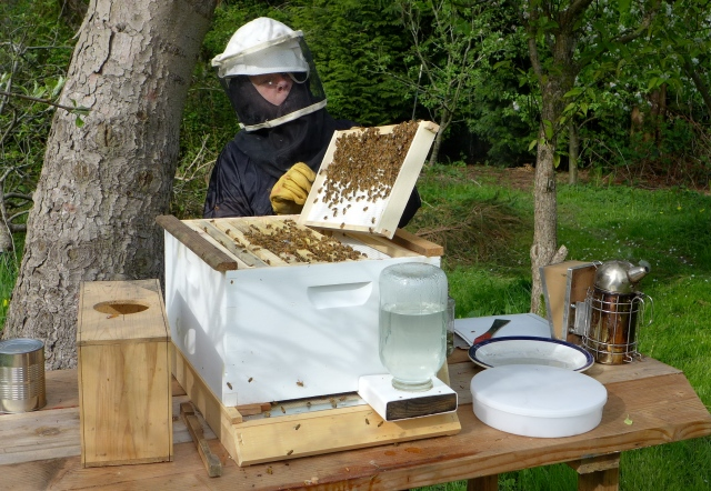 hive inspection9