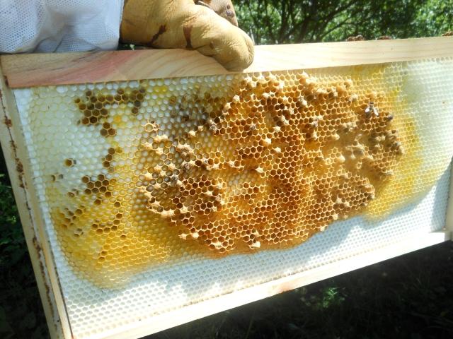 failing beehive 2