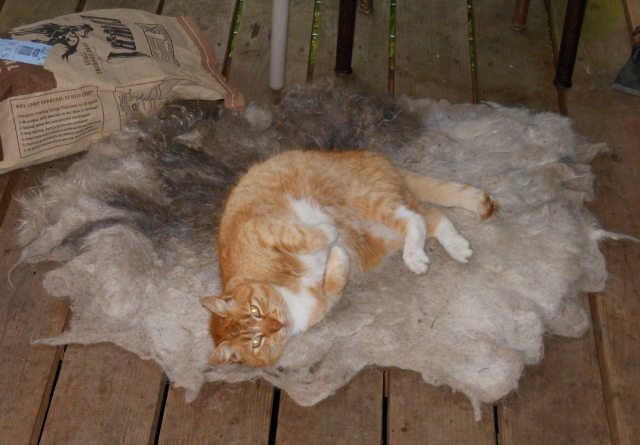 Izzy and Mr D's felted rug 0419