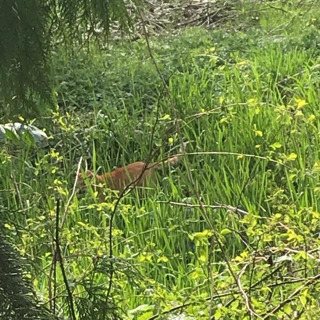 Izzy jungle kitty 0418