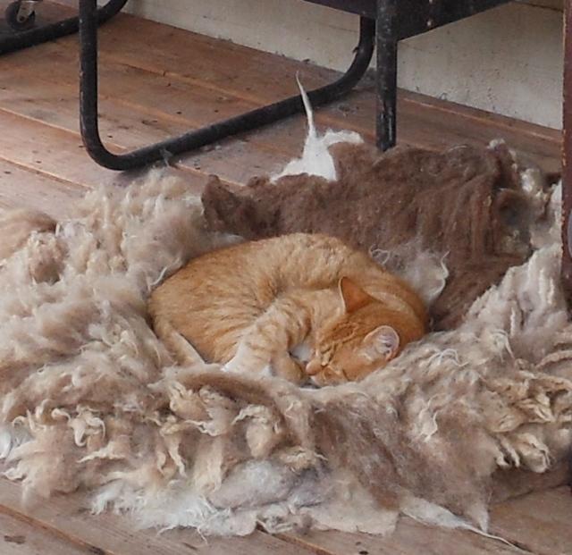 Izzy on fleece rug 0919