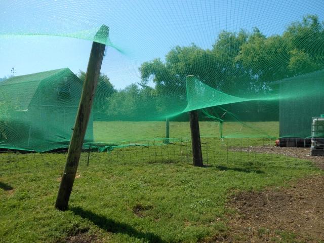 Netting2