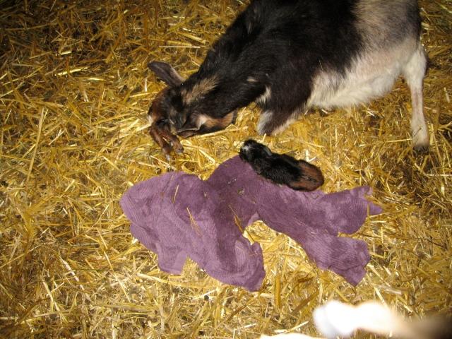 peewee just born 0409