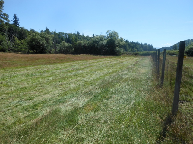 cut grass for hay