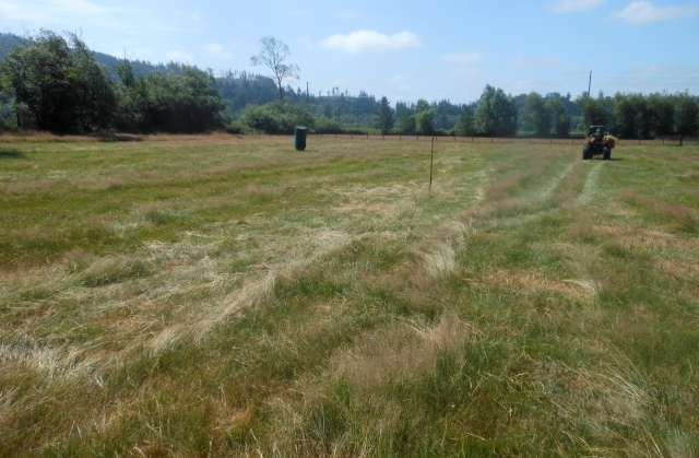 hay field collected