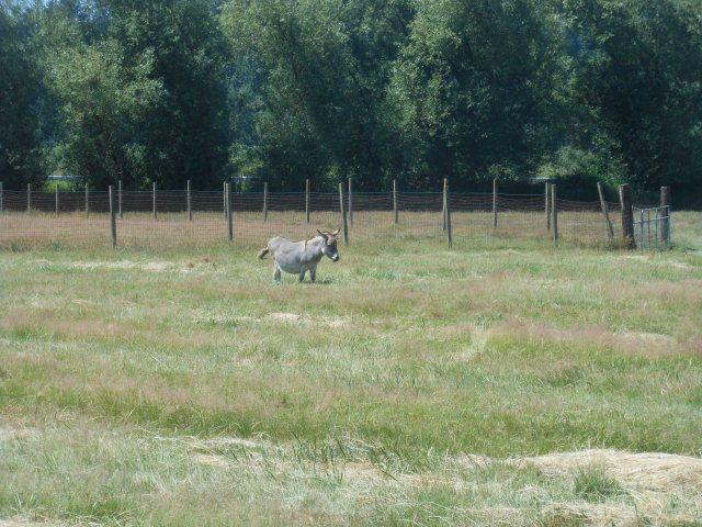 Marty in hay field