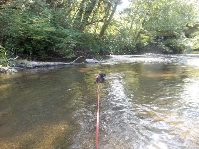 Ryeleigh in river