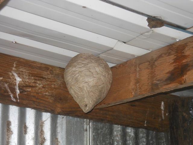 Pig Shelter Nest