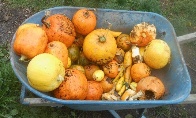 Pumpkins and Zucchini